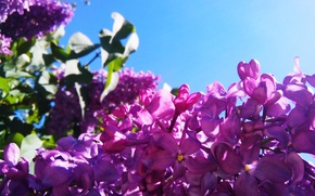 Wallpaper summer, the sky, the sun, macro, lilac