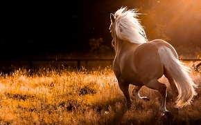 Picture horse, nature, sports