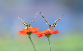 Picture wings, flowers, butterflies