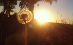 Picture macro, flower, sun set