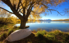 Wallpaper tree, lake, Boat, autumn