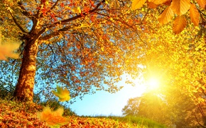 Picture forest, autumn, gold, the sun, yellow, leaves, branches, trees, the edge