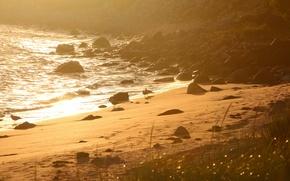 Picture sea, beach, birds, morning