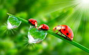 Wallpaper Rosa, macro, rendering, Wallpaper from lolita777, greens, insects, the sun, ladybugs, drops