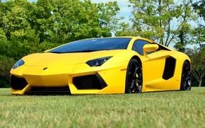 Picture Lambo, yellow, aventador, lp700-4