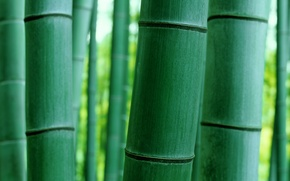 Picture macro, nature, bamboo, trunk