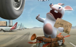 Wallpaper rabbit, aircraft, hitchhiking, vote
