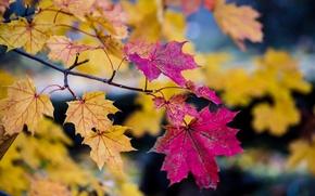 Wallpaper bokeh, autumn, branches, tree, leaves