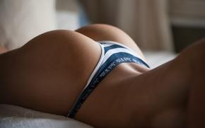 Wallpaper ass, ass, Thong, Jack Russell