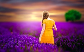 Picture girl, tree, treatment, lavender, Lavender, all lilac