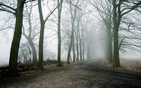 Picture road, trees, landscape, fog