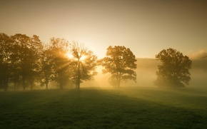 Wallpaper morning, beauty, widescreen, leaves, HD wallpapers, Wallpaper, leaves, tree, greens, full screen, the sun, background, ...