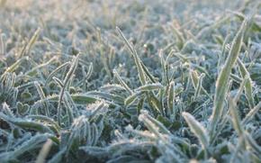 Picture cold, grass, blue