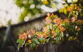 Picture leaves, flowers, the fence, Bush