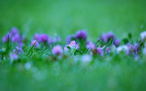 Picture Green, clover