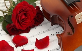 Picture flowers, notes, music, violin, roses, petals, music, book, flowers, violin, book, petals, roses, sheet music
