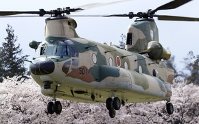 Picture helicopter, transport, military, Chinook, CH-47J