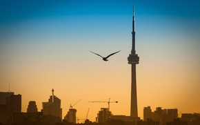Picture landscape, the city, bird