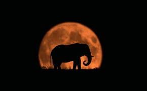 Picture the moon, elephant, silhouette, Last of His Kind