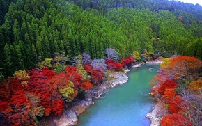 Picture autumn, trees, River, Bank, Japan.