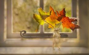 Wallpaper leaves, window, autumn
