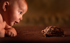 Picture look, turtle, child, curiosity