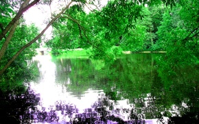 Picture leaves, water, trees, nature, river, calm, Saint Petersburg, bright, Central PARK