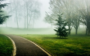 Picture greens, grass, leaves, trees, nature, green, fog, background, tree, Wallpaper, track, wallpaper, alley, path, widescreen, …