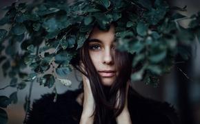 Picture leaves, Ashley, the beauty, wreath, Jesse Duke