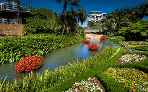 Wallpaper Brisbane, Queensland, palm trees, Pansy, Park, flowers, Sunny, trees, Petunia, Australia, grass, pond, design