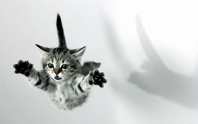Picture flight, kitty, paws, shock