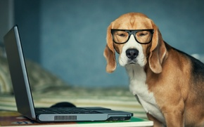 Picture dog, glasses, laptop