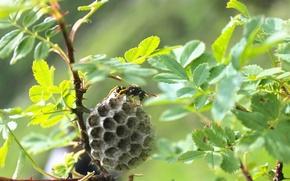 Picture Macro, Nature, OSA