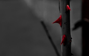 Picture Red, Rose, Roses, Black and White, Macro, Garden, Blood, Thorn