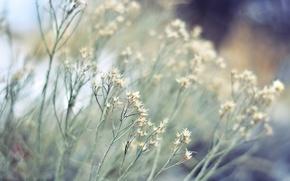 Wallpaper focus, blur, bokeh, grass, nature, dry, plant