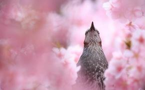 Wallpaper summer, flowering, bird, nature