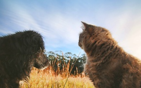 Picture cat, summer, dog, friendship