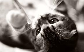Picture cat, cat, kitty, animal, kitten, cat, animal