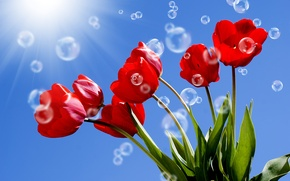 Picture the sky, leaves, the sun, rays, bubbles, stems, tulips, red