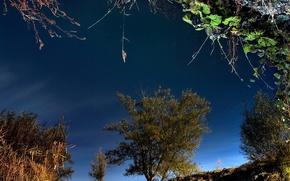 Wallpaper trees, grass, reflection