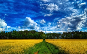 Picture ROAD, FOREST, GRASS, The SKY, FIELD, CLOUDS, FLOWERS, TREES