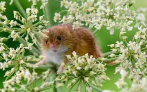 Picture macro, plant, mouse, rodent, the mouse is tiny
