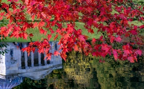 Picture autumn, leaves, branches, lake, reflection, England, maple, Stored, England, Wiltshire, Stourhead Garden, Wiltshire, the landscape …