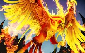 Picture fire, bird, wings, art, tail, Phoenix