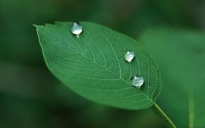 Wallpaper drops, plant, leaf, green