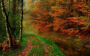 Wallpaper river, hdr, leaves, leaves, water, trees, walk, autumn, river, forest, forest, nature, walk, trees, autumn, ...