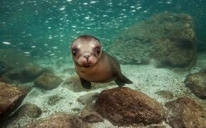 Picture the ocean, Mexico, black sea lion, California sea lion, James R.D. Scott Photography, species of …