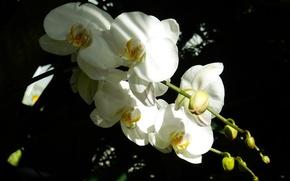 Picture flower, grass, flowers, widescreen, Wallpaper, wallpaper, Orchid, widescreen, background, the Wallpapers, full screen, HD wallpapers, …