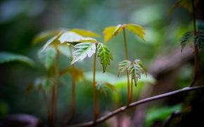 Picture leaves, macro, green, background, widescreen, Wallpaper, blur, branch, wallpaper, form, leaves, widescreen, leaves, background, full …