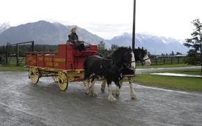 Picture British Columbia, wagon, Horses, B.C., cranbrook, fort steele